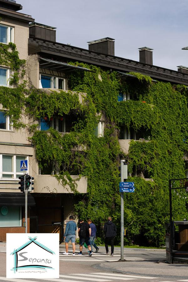 گیاهان آویز در نمای سبز ساختمان